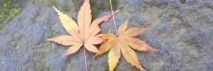 東京大学工学部大学院 石川研究室の募集・採用の画像
